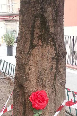 L'immagine di Padre Pio su un albero a Napoli, i fedeli gridano al miracolo